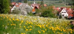 Blumenwiese mit Dorf im Hintergrund